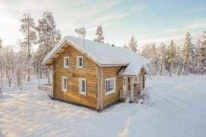 hallahaukka_winter2